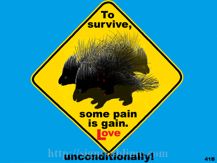 41B_Porcupine_Survival_700x700
