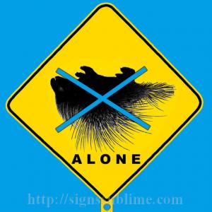 41 Porcupine Survival